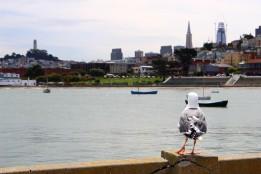 San Francisco Travel Blog (12)