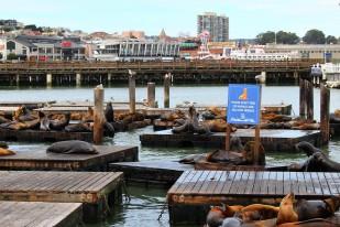 San Francisco Travel Blog (3)