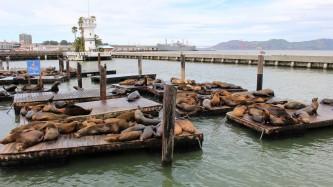San Francisco Travel Blog (4)