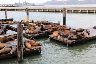 San Francisco Travel Blog (6)