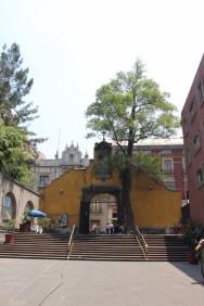 Mexico City Travel Blog 2 (8)