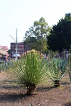 Mexico_City_Travel_Blog (12)