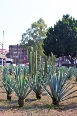 Mexico_City_Travel_Blog (13)