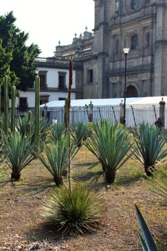 Mexico_City_Travel_Blog (16)