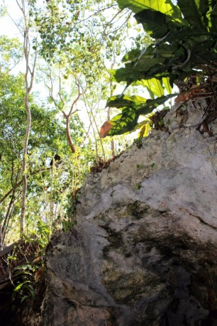 Things_To_Do_In_Tulum_Mexico_Grand_Cenote (34)
