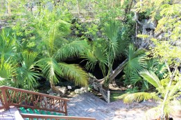 Things_To_Do_In_Tulum_Mexico_Grand_Cenote (55)