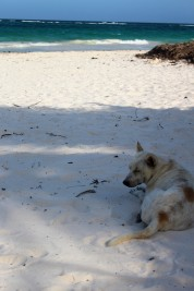 Tulum Travel Blog (38)