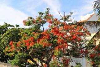 Cartagena Colombia Travel Blog (11)