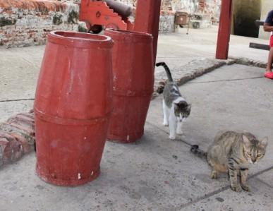 Cartagena Colombia Travel Blog 4 (21)