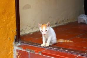 Cartagena Colombia Travel Blog 4 (33)