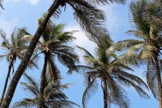Cartagena Colombia Travel Blog 4 (40)