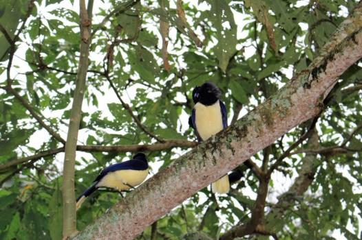 Iguazu Falls Travel Blog (30)