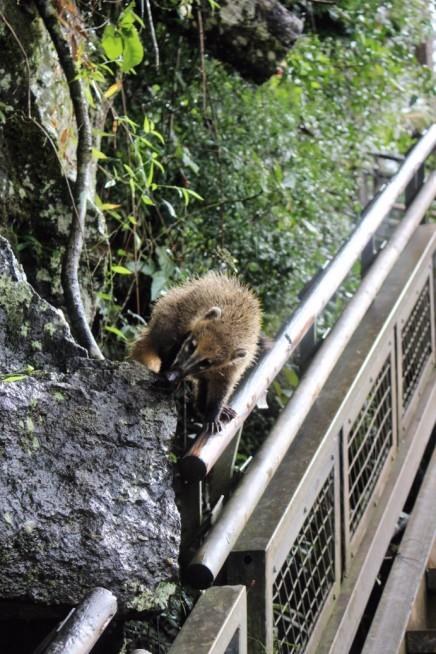 Iguazu Falls Travel Blog (42)