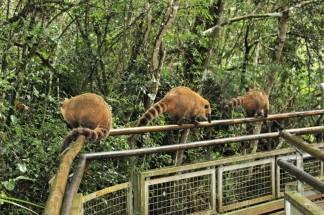 Iguazu Falls Travel Blog (44)