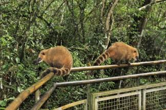 Iguazu Falls Travel Blog (45)