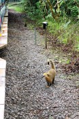 Iguazu Falls Travel Blog (57)