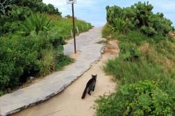 Rio Travel Blog (13)