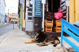 Valparaiso Chile Travel Blog (27)