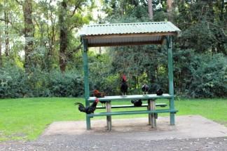 Australian Road Trip Travel Blog (41)
