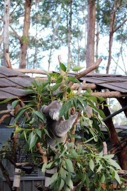 Australian Road Trip Travel Blog (43)