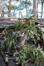 Australian Road Trip Travel Blog (44)