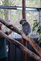 Australian Road Trip Travel Blog (45)