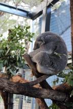 Australian Road Trip Travel Blog (46)
