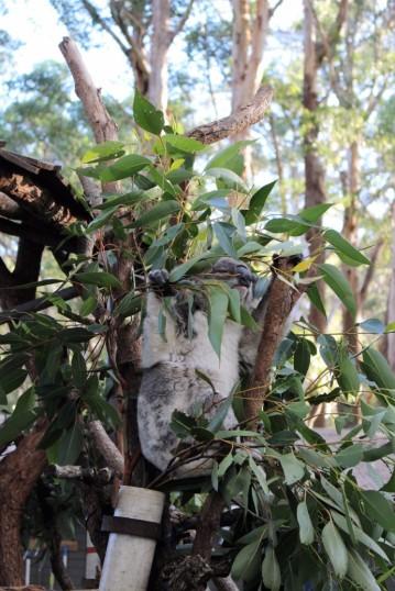 Australian Road Trip Travel Blog (50)