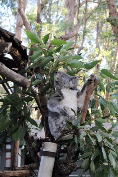 Australian Road Trip Travel Blog (51)