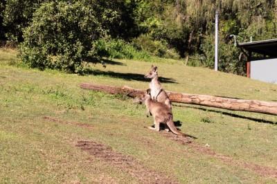 Australian Road Trip Travel Blog (59)