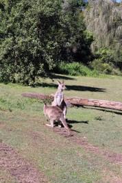 Australian Road Trip Travel Blog (60)