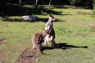 Australian Road Trip Travel Blog (61)