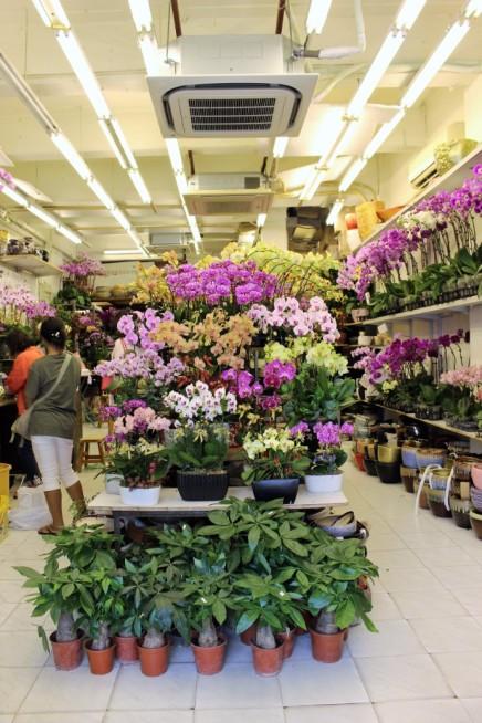 Hong Kong Travel Blog (142)