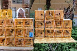 Hong Kong Travel Blog (143)