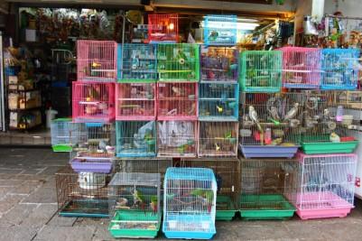 Hong Kong Travel Blog (146)