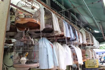 Hong Kong Travel Blog (147)