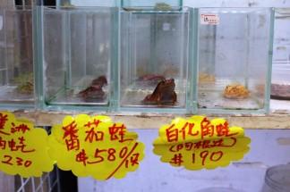 Hong Kong Travel Blog (153)