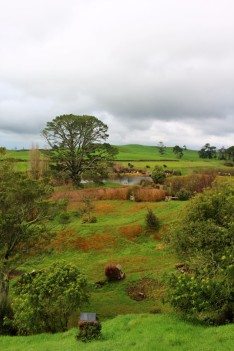 New Zealand Travel Blog 3 (24)