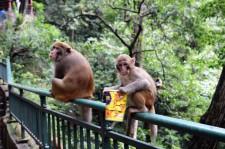 Guiyang and Chengdu China Travel Blog (14)