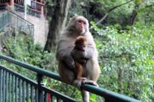 Guiyang and Chengdu China Travel Blog (16)