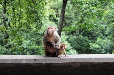 Guiyang and Chengdu China Travel Blog (36)