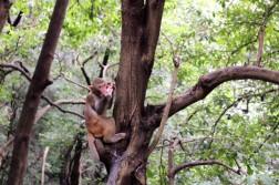 Guiyang and Chengdu China Travel Blog (4)
