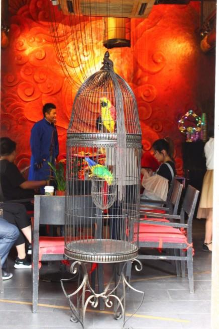 Guiyang and Chengdu China Travel Blog (57)