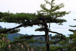 Huangshan Travel Blog (13)