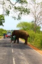 Sri Lanka Travel Itinerary 2 (24)