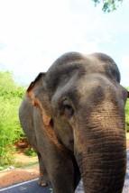Sri Lanka Travel Itinerary 2 (25)