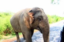 Sri Lanka Travel Itinerary 2 (26)