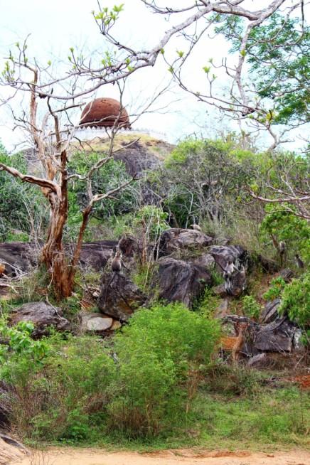 Sri Lanka Travel Itinerary 2 (35)