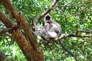 Sri Lanka Travel Itinerary 2 (37)