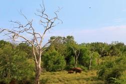 Sri Lanka Travel Itinerary 2 (41)
